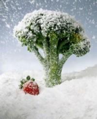 alimentos-congelados-243x300