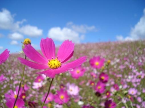 Flores-Do-Campo-14